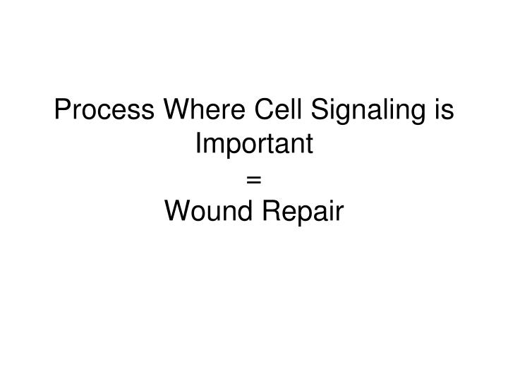 Process Where Cell Signaling is Important
