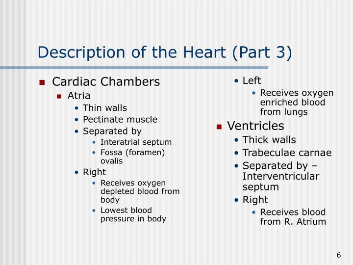 Cardiac Chambers