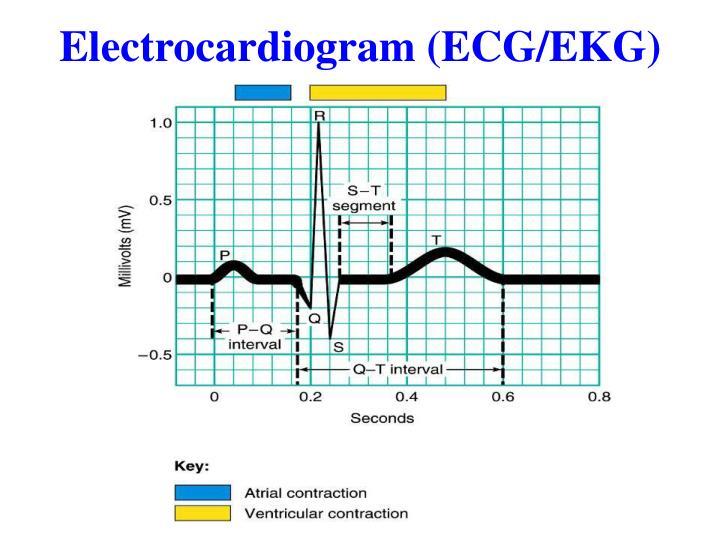 Electrocardiogram (ECG/EKG)