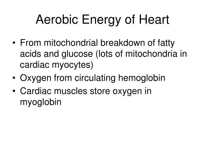Aerobic Energy of Heart