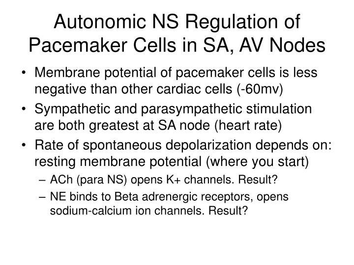 Autonomic NS Regulation of  Pacemaker Cells in SA, AV Nodes