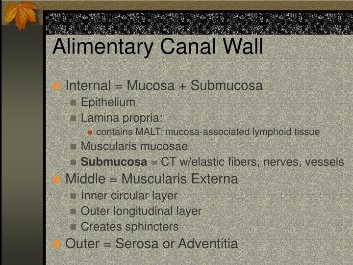 Alimentary Canal Wall