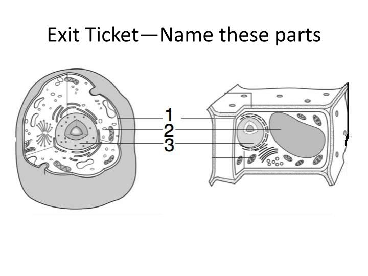Exit Ticket—Name these parts