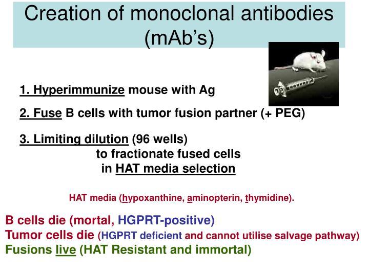 Creation of monoclonal antibodies (mAb's)
