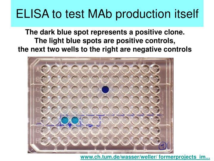 ELISA to test MAb production itself