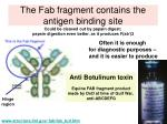 the fab fragment contains the antigen binding site