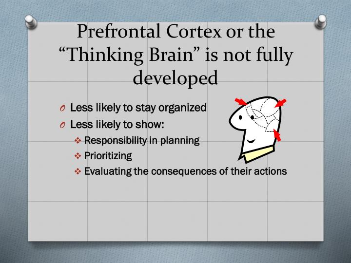"Prefrontal Cortex or the ""Thinking Brain"" is not fully developed"