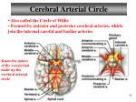 cerebral arterial circle