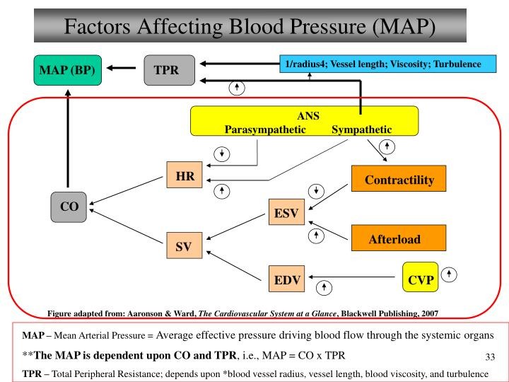 Factors Affecting Blood Pressure (MAP)