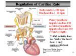 regulation of cardiac rate