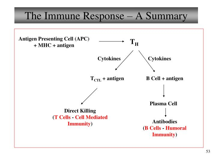The Immune Response – A Summary