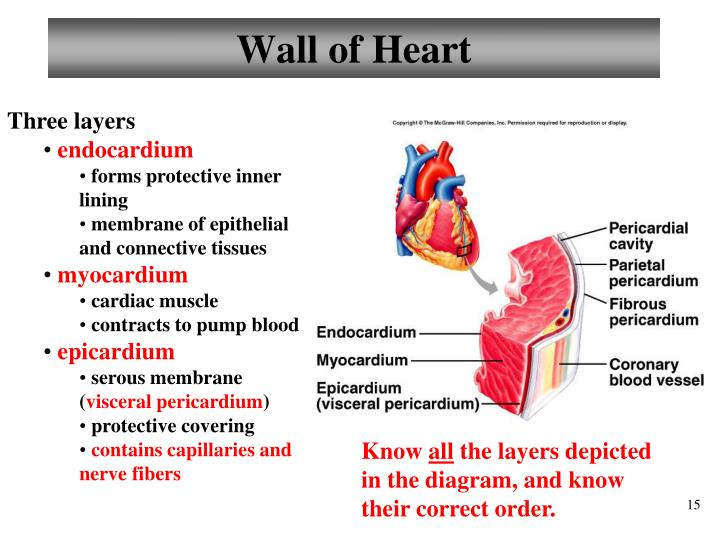 Wall of Heart