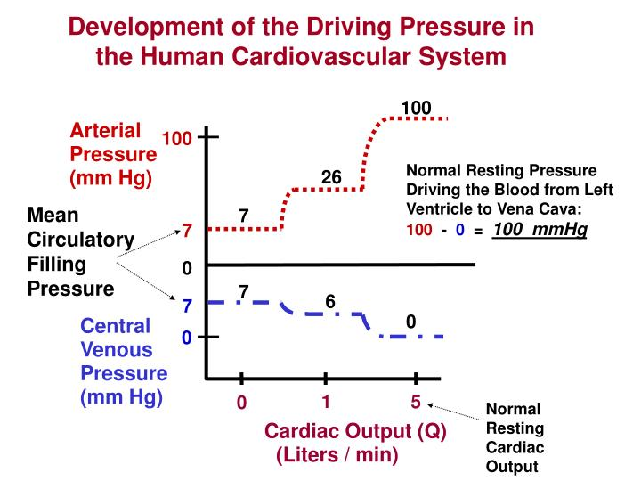 Development of the Driving Pressure in the Human Cardiovascular System