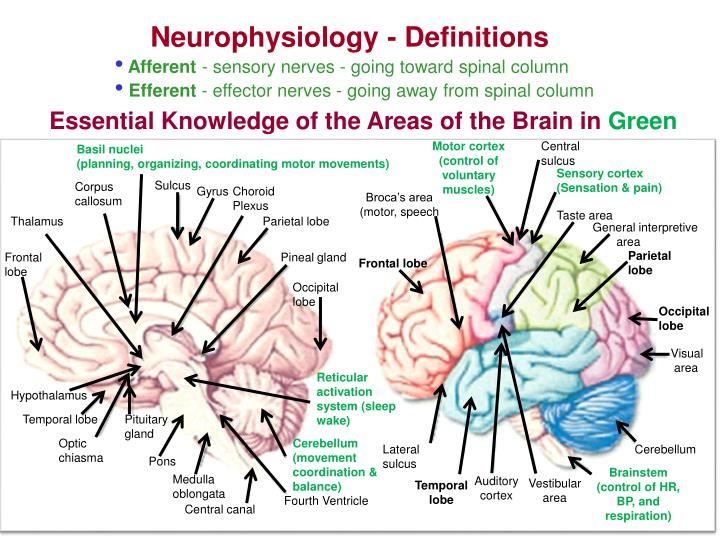 Neurophysiology - Definitions
