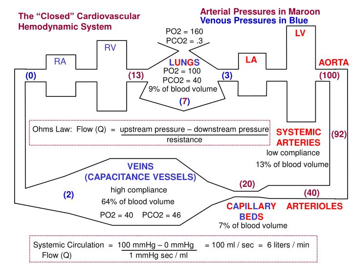 Arterial Pressures in Maroon