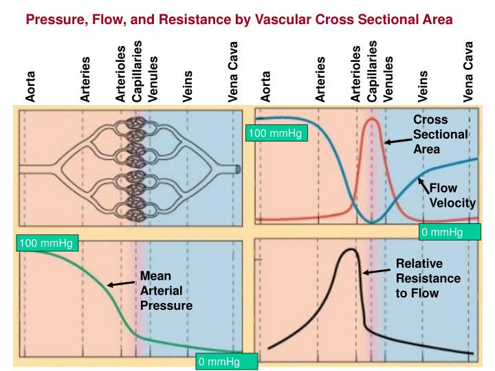 Pressure, Flow, and Resistance by Vascular Cross Sectional Area