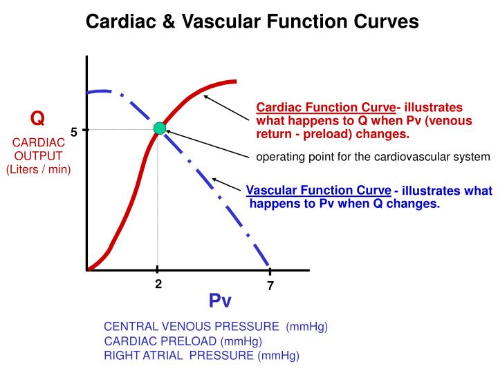 Cardiac & Vascular Function Curves