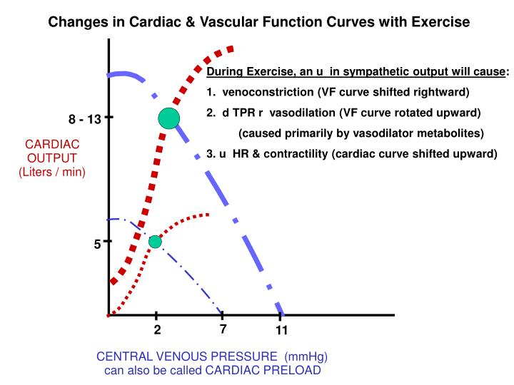 Changes in Cardiac & Vascular Function Curves with Exercise