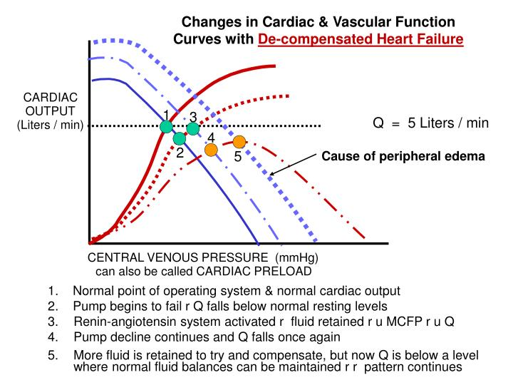 Changes in Cardiac & Vascular Function
