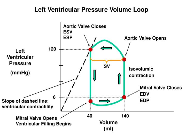 Left Ventricular Pressure Volume Loop