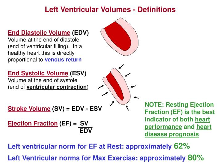 Left Ventricular Volumes - Definitions