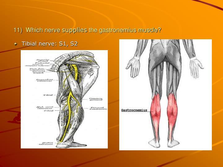 11)  Which nerve