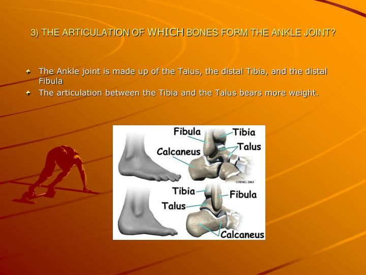 3) THE ARTICULATION OF