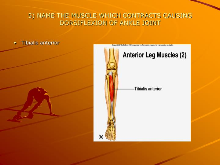 5) NAME THE MUSCLE WHICH CONTRACTS CAUSING DORSIFLEXION OF ANKLE JOINT