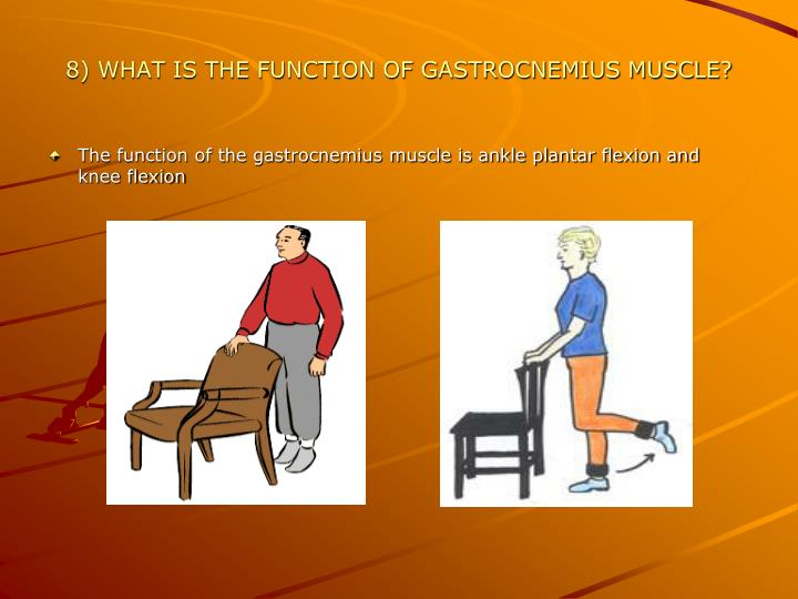 8) WHAT IS THE FUNCTION OF GASTROCNEMIUS MUSCLE?