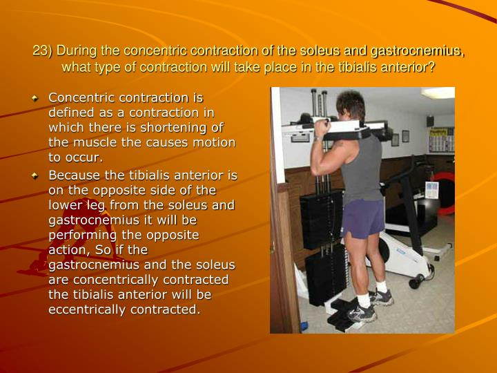 23) During the concentric contraction of the soleus and gastrocnemius, what type of contraction will take place in the tibialis anterior?