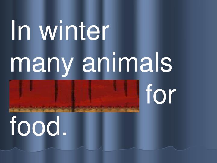 In winter     many animals    s c avenge for food.