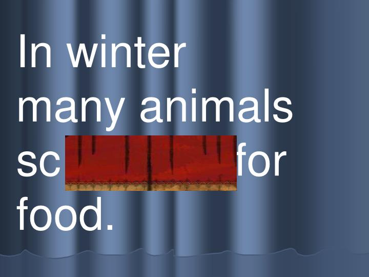 In winter     many animals    sc avenge for food.
