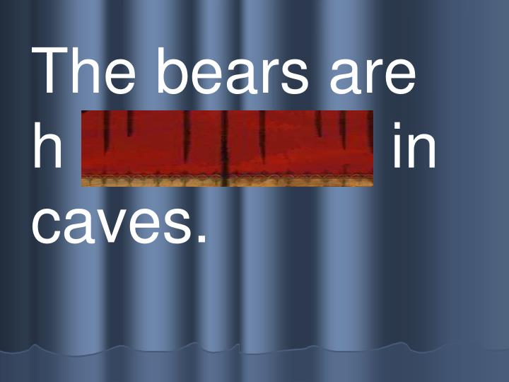 The bears are  h i bernating in caves.