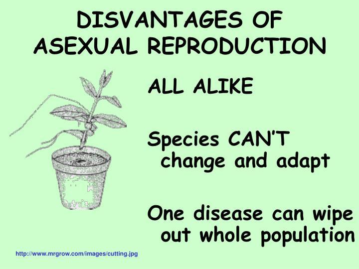 DISVANTAGES OF