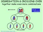 segregation crossing over together make even more combinations