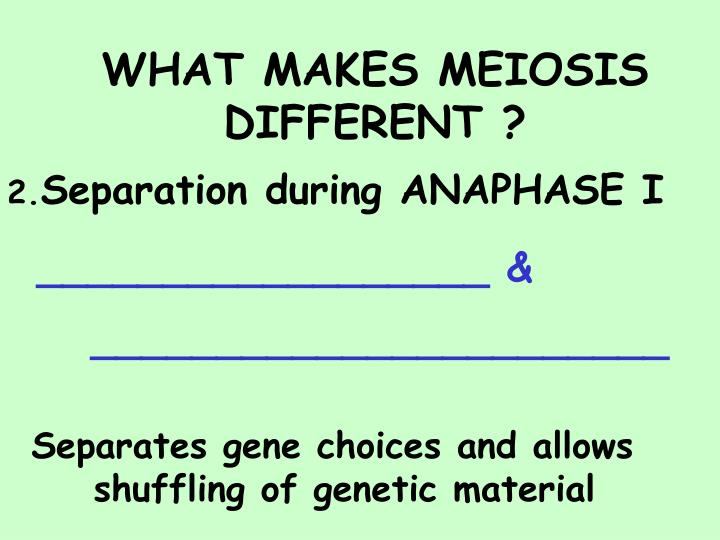 WHAT MAKES MEIOSIS DIFFERENT ?