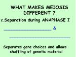 what makes meiosis different3