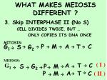 what makes meiosis different5