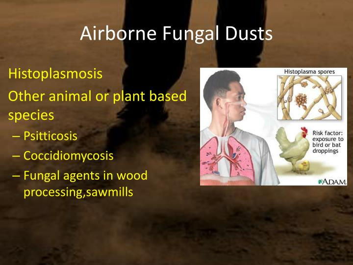 Airborne Fungal Dusts