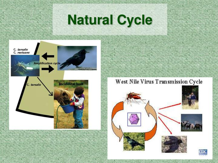 Natural Cycle