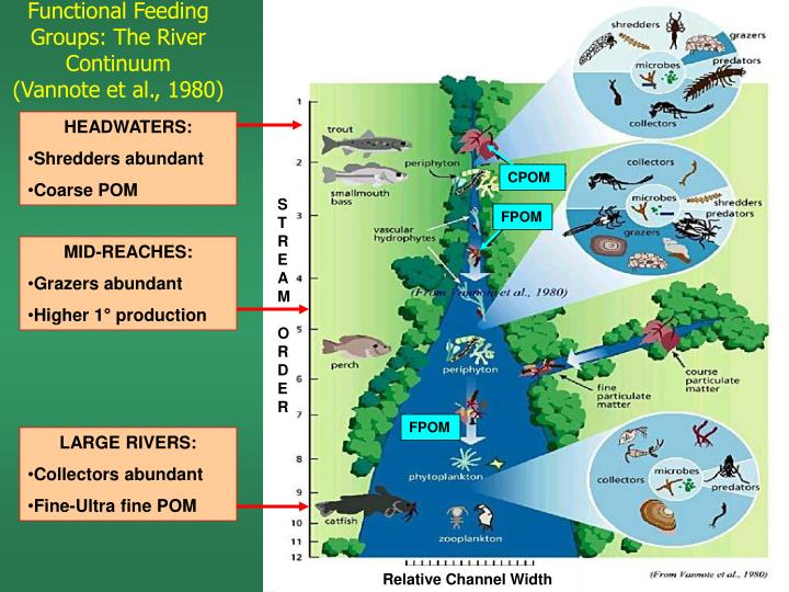Functional Feeding Groups: The River Continuum
