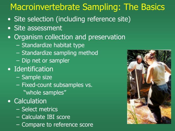 Macroinvertebrate Sampling: The Basics