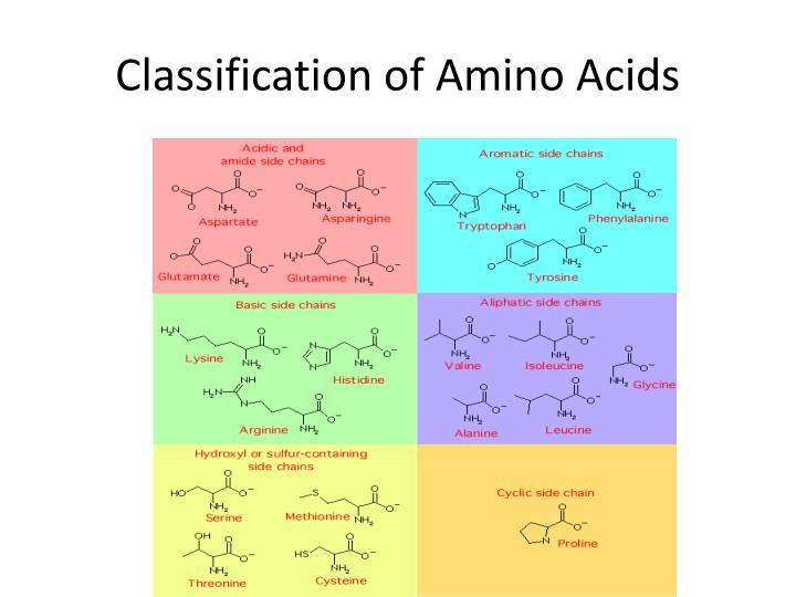 Classification of Amino Acids