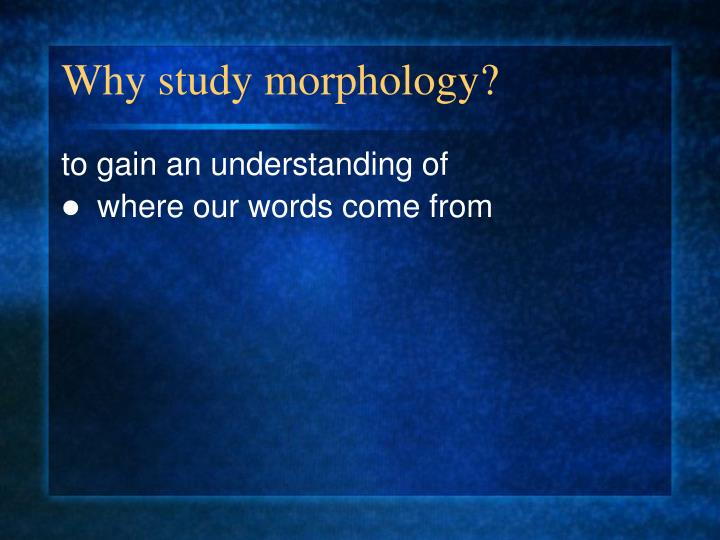 Why study morphology?