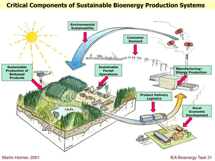 Critical Components of Sustainable Bioenergy Production Systems