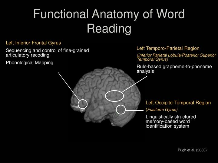 Functional Anatomy of Word Reading