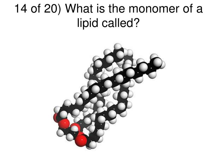 14 of 20) What is the monomer of a lipid called?