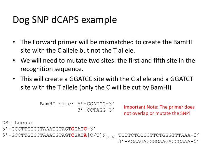Dog SNP dCAPS example