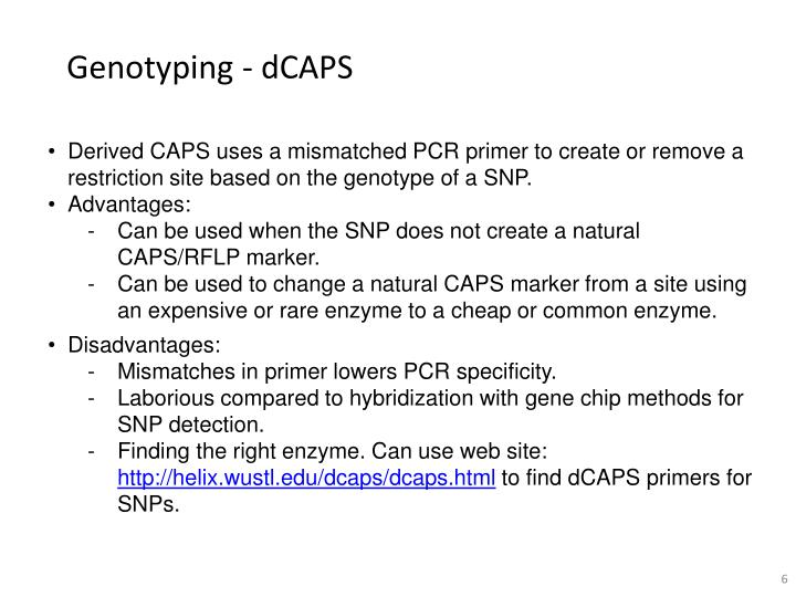 Genotyping - dCAPS