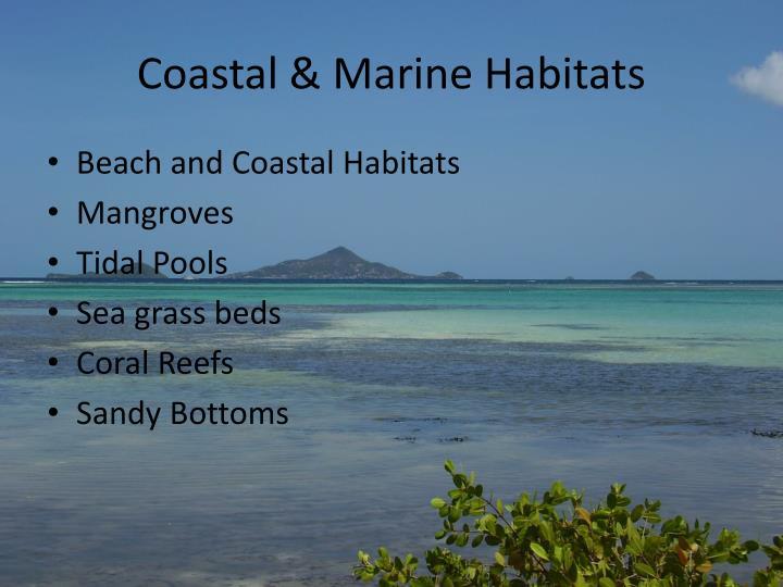 Coastal & Marine Habitats